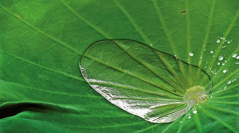 游览2021年肖蒙国际花园节 关注花园中的仿生学